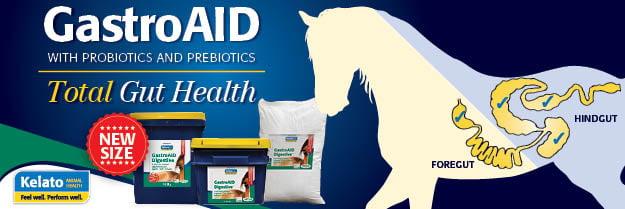 C1L1P0 KEL0065 - EQ Life GastroAID WebAd_300x100px