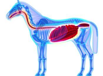 GastroHEALTH GastroAID