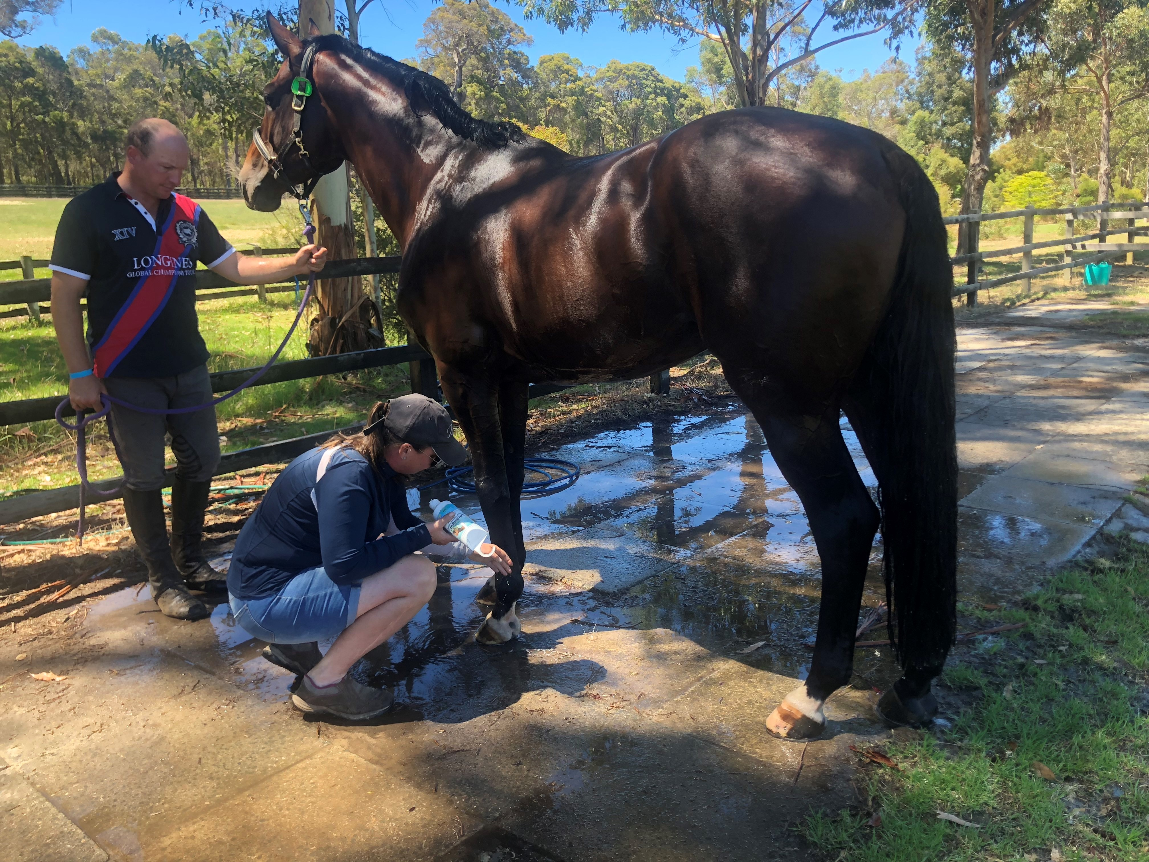 Eve & Rick using CoolingGEL on their stallion